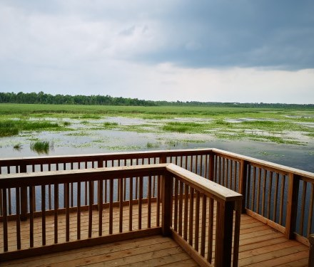 Boardwalk at Ken Reid Conservation Area