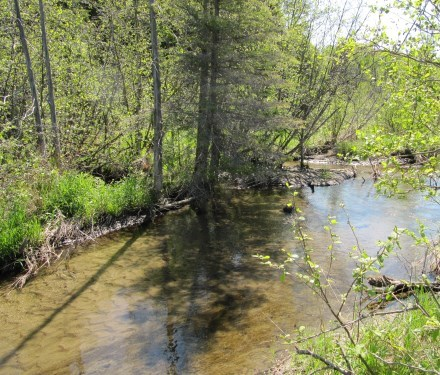 Pigeon River Headwaters Conservation Area