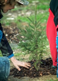 young boy planting tree
